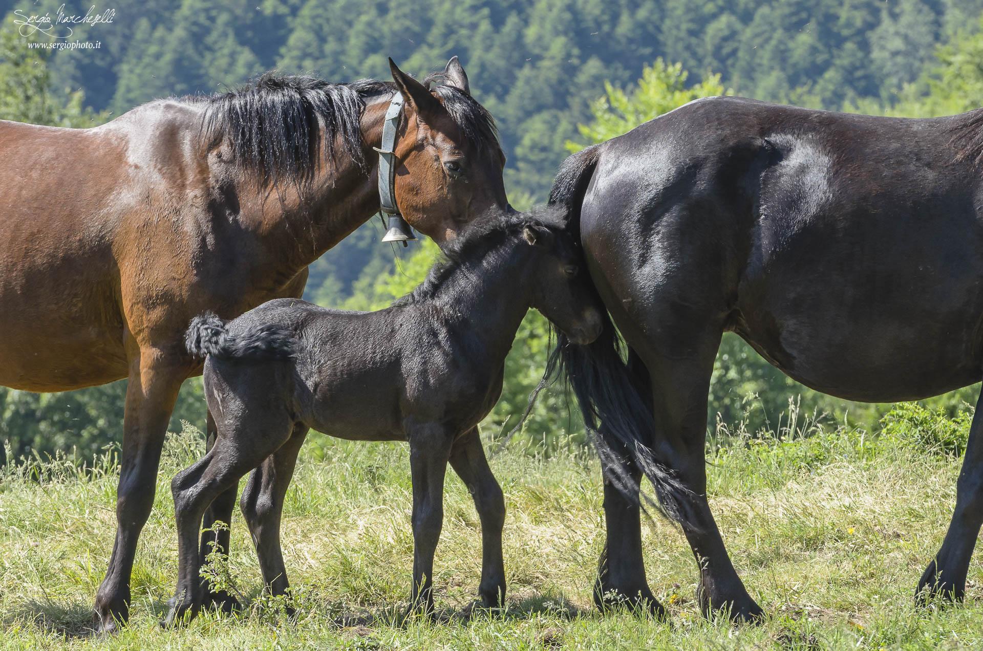 cavalli-tavola_02