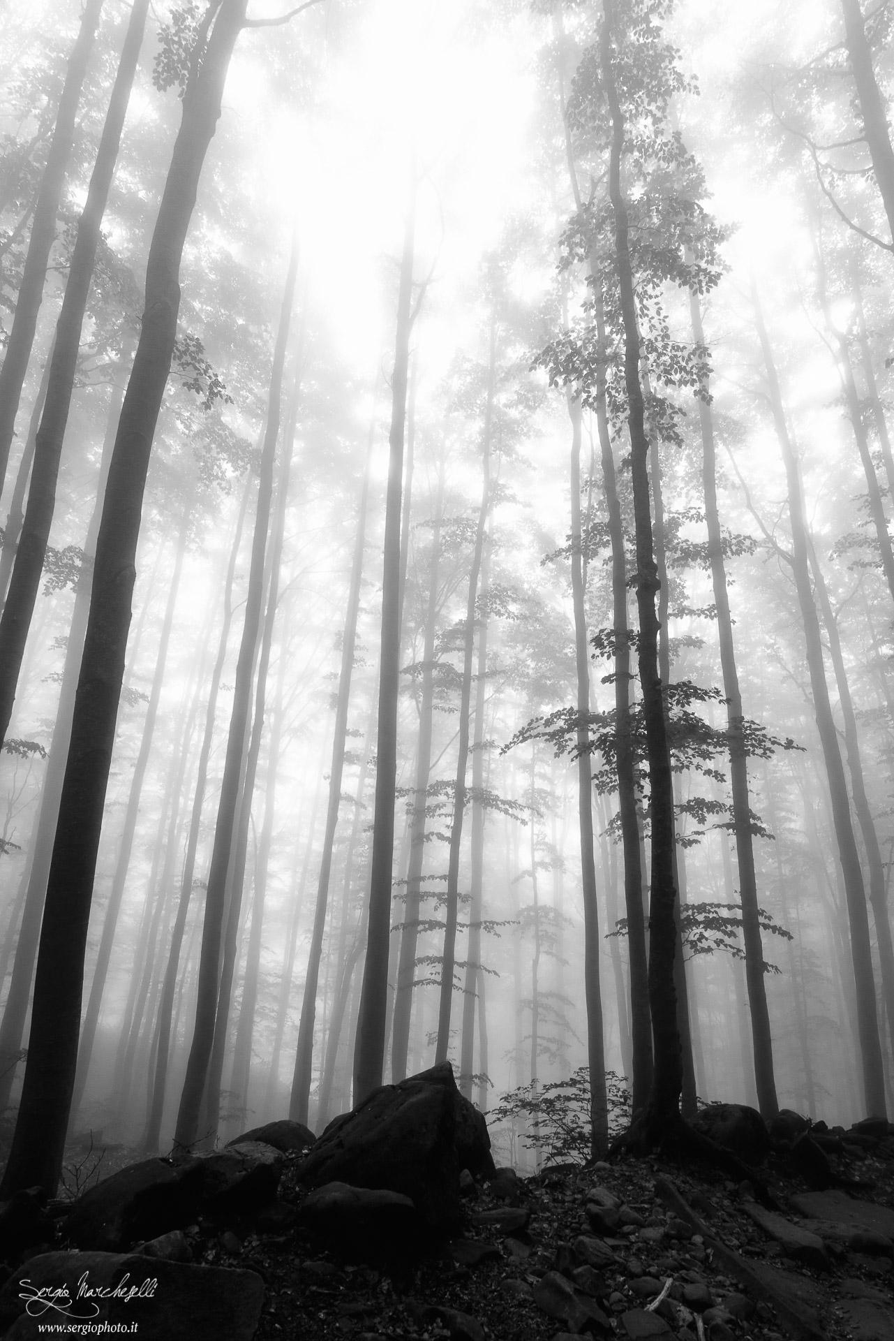 il-silenzio-dei-boschi