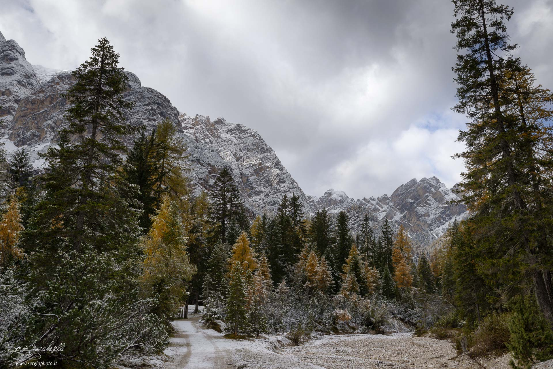 bosco-di-braies_01