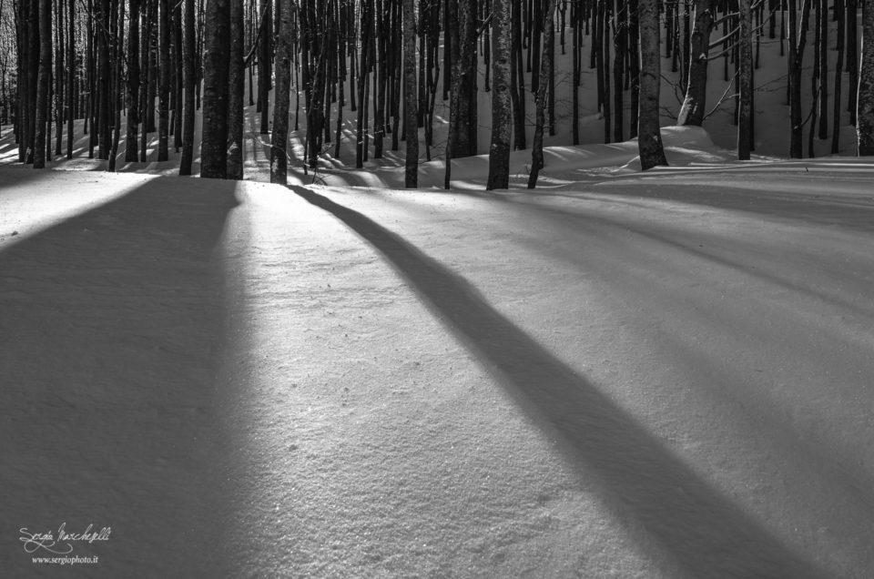 """""""Vedere"""" in bianco e nero"""