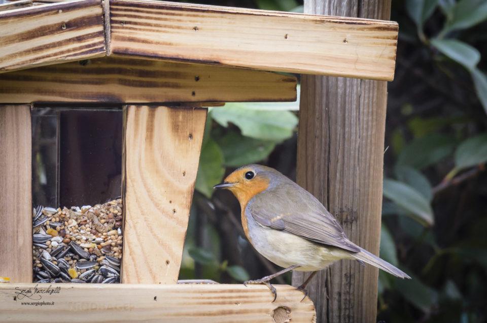 La casetta per gli uccellini