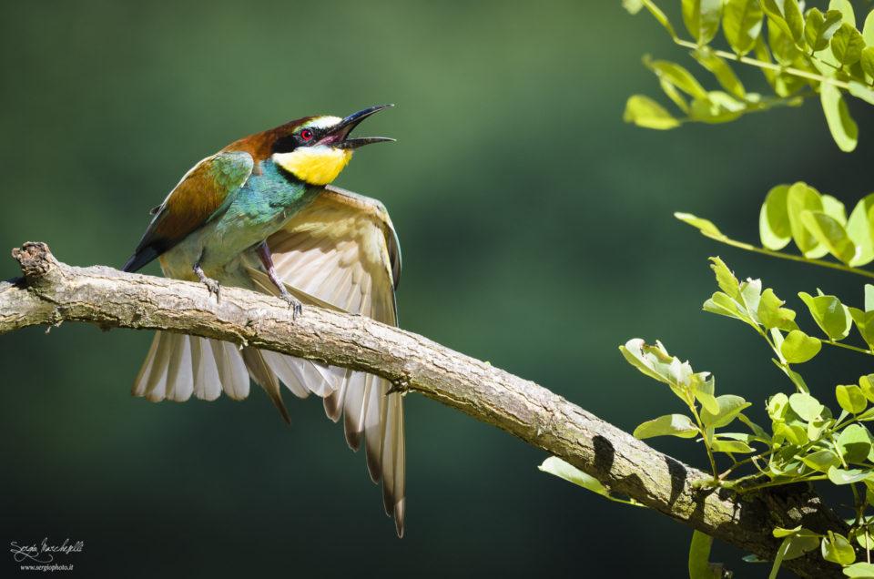 L'arcobaleno con le ali